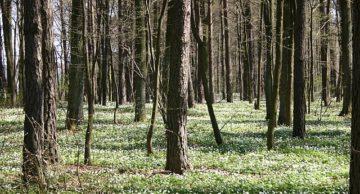 Rolniku, posadź las i otrzymaj dofinansowanie z PROW!