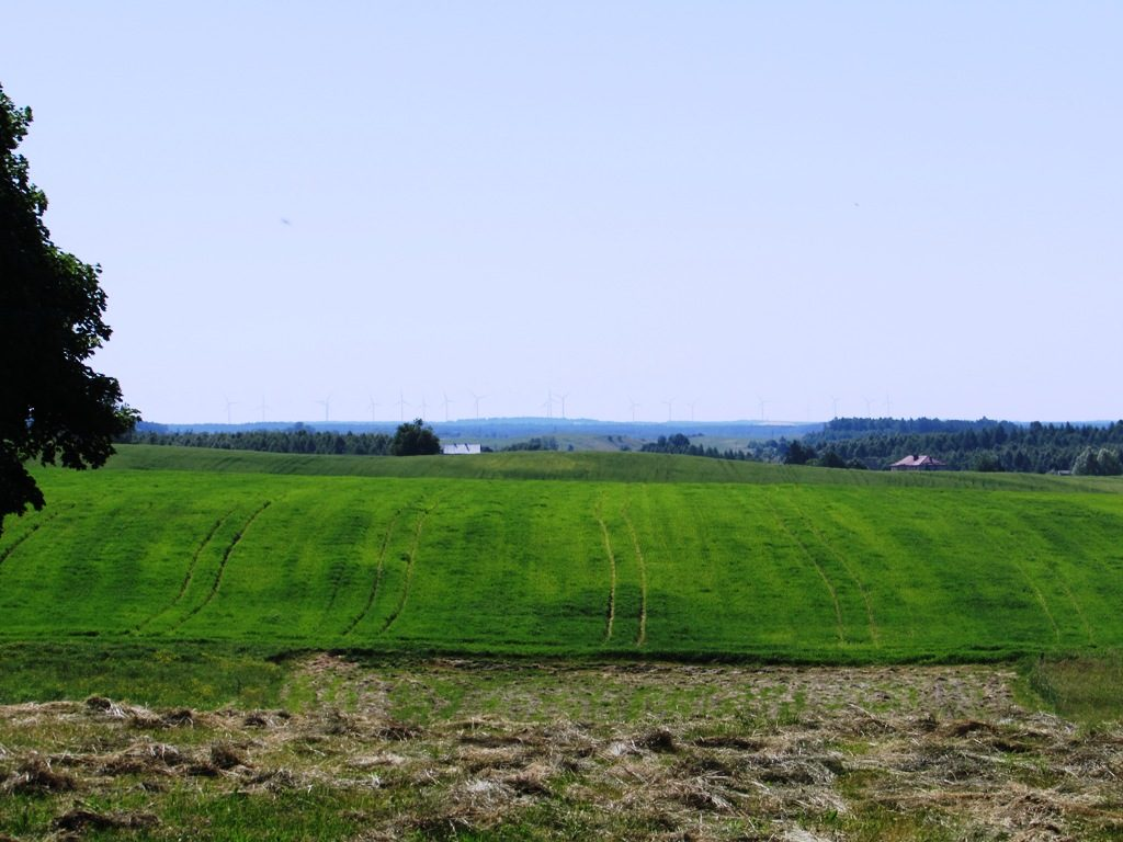 Konsultacje społeczne w sprawie uprawy maku i konopi włóknistych