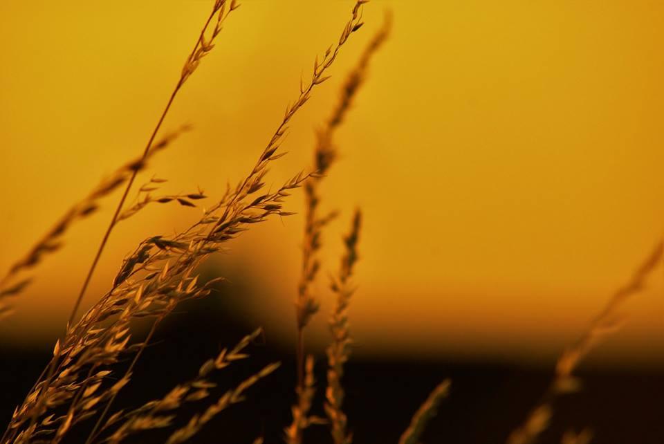 Rolniku, zabezpiecz gospodarstwo przed suszą, składając wniosek o dotację!