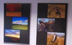 Ptaki, kwiaty, samoloty, samochody sportowe i … wspaniała kolekcja aparatów fotograficznych Ryszarda Makszyńskiego!